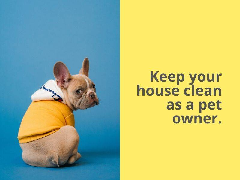 How to keep your house clean as a pet owner