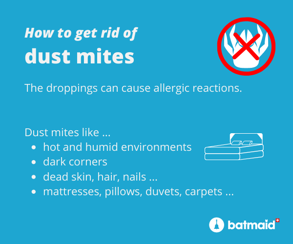 dust-mites-removal